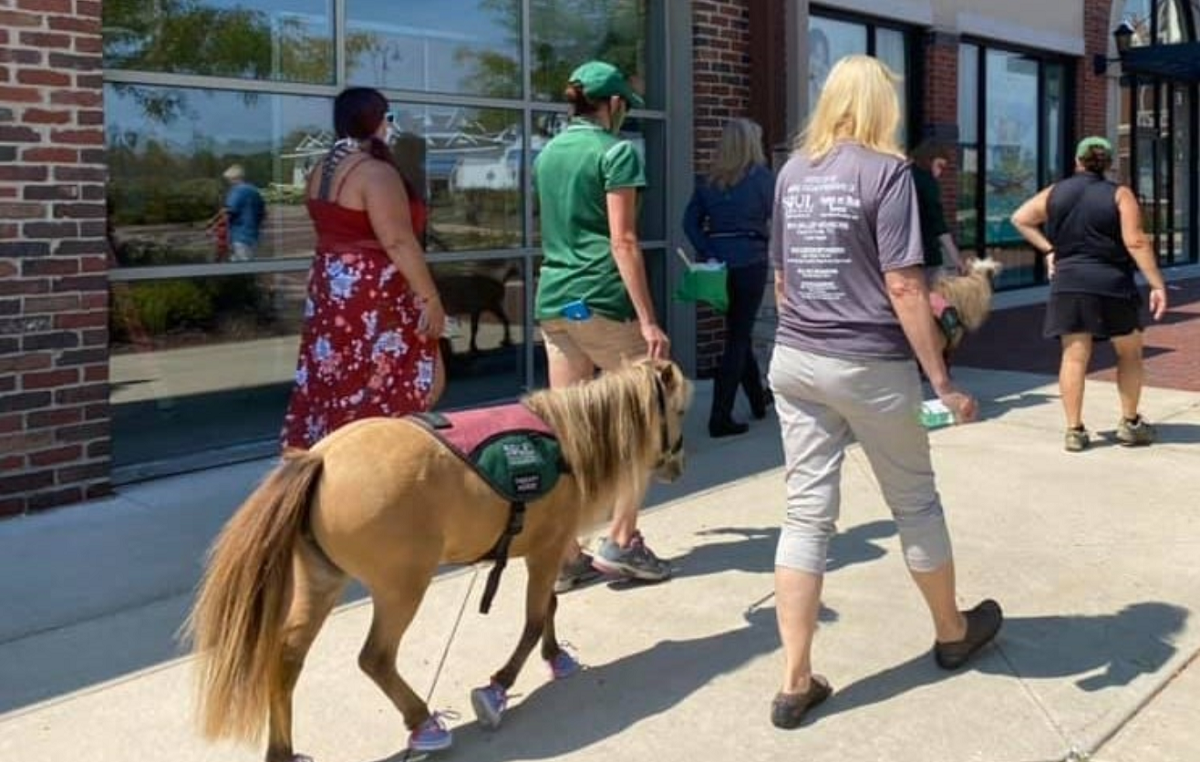 WALK WITH MINI HORSES AT DEER PARK TOWN CENTER