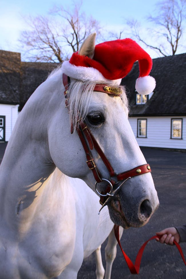 Tempel Lipizzan Performances - Holiday Special