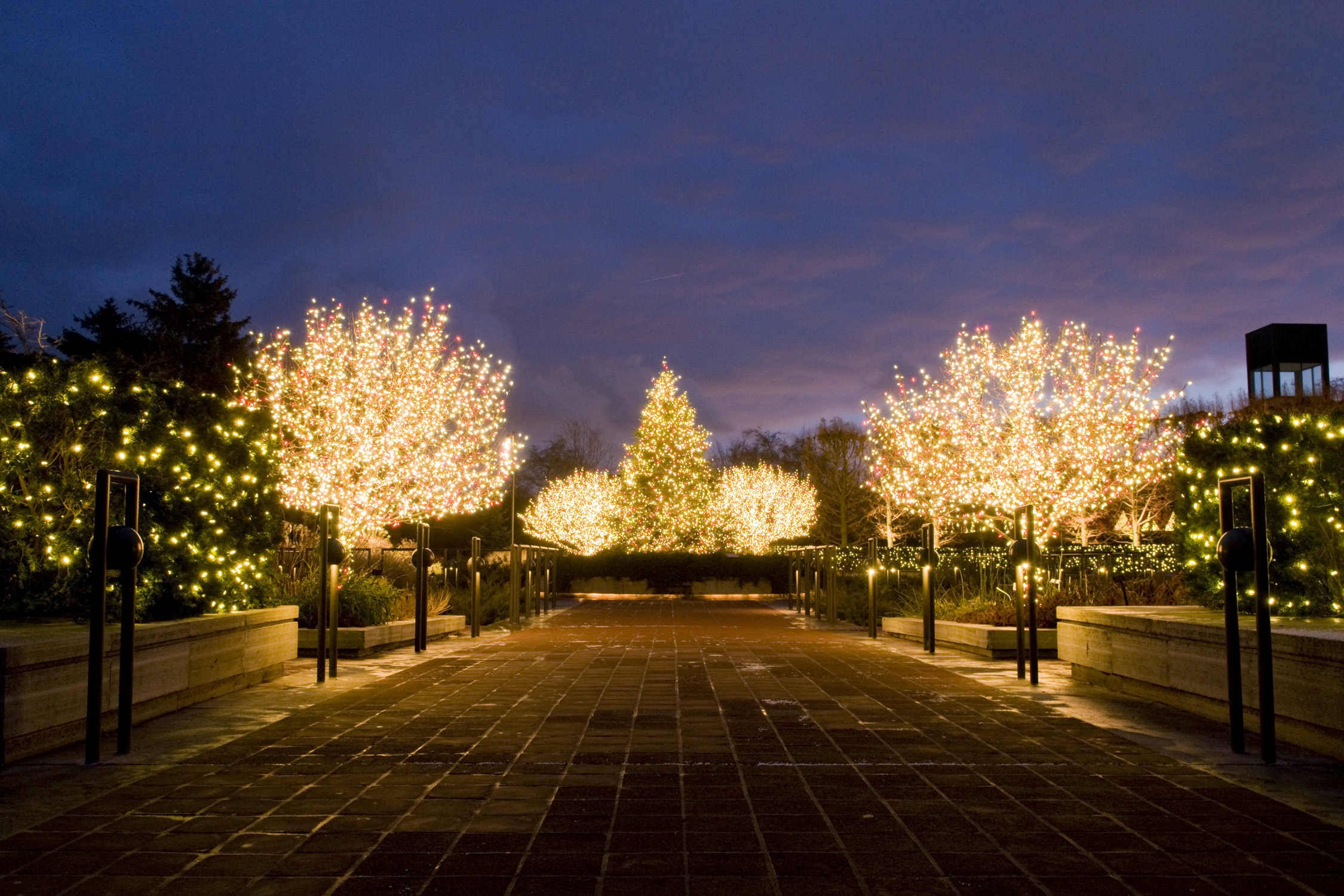 Capturing Holiday Lights at Chicago Botanic Garden