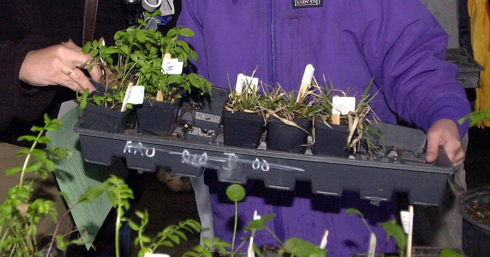 Annual Native Plant Sale at Independence Grove