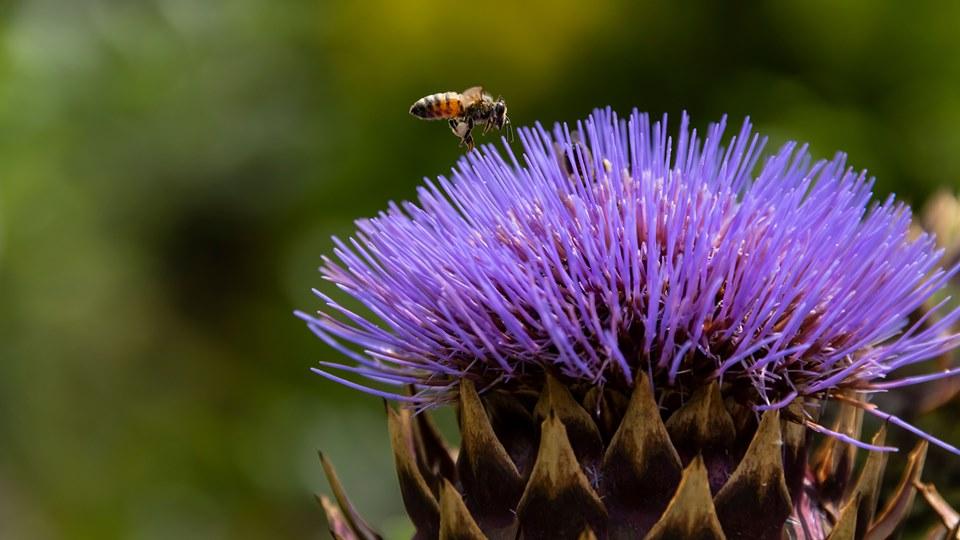 A Pollinator's Perspective at the Chicago Botanic Gardens