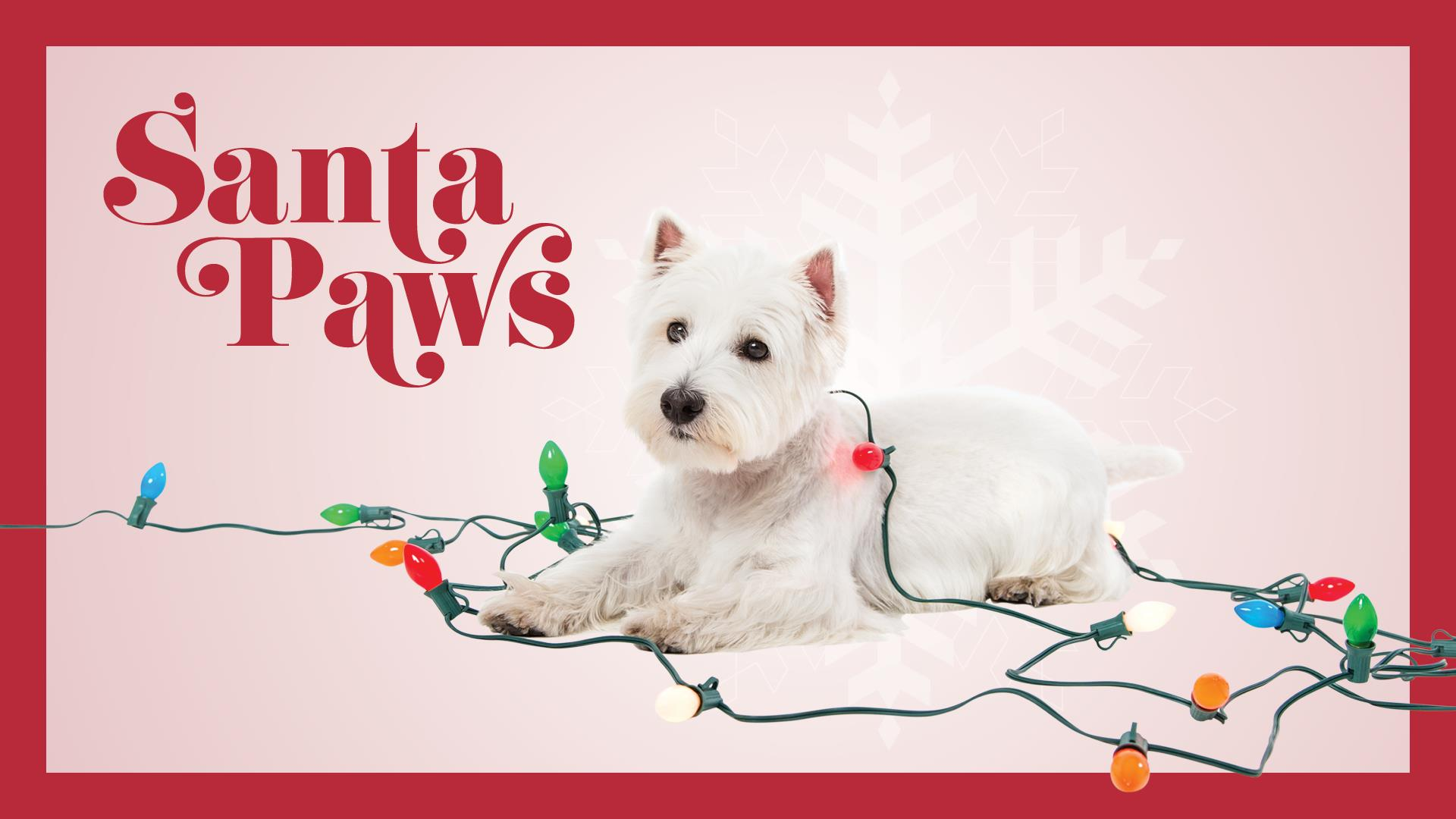 Santa Paws at Hawthorn Mall