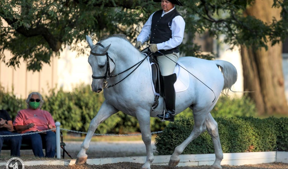 How a Lipizzan Stallion Learns to Dance at Tempel Lipizzans