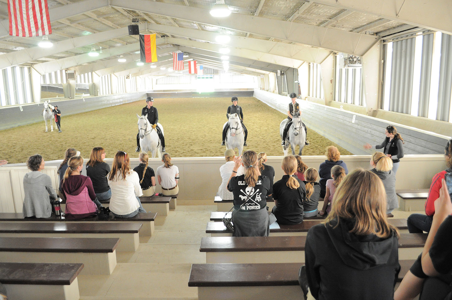 The Tempel Lipizzans Behind-The-Scenes Tour