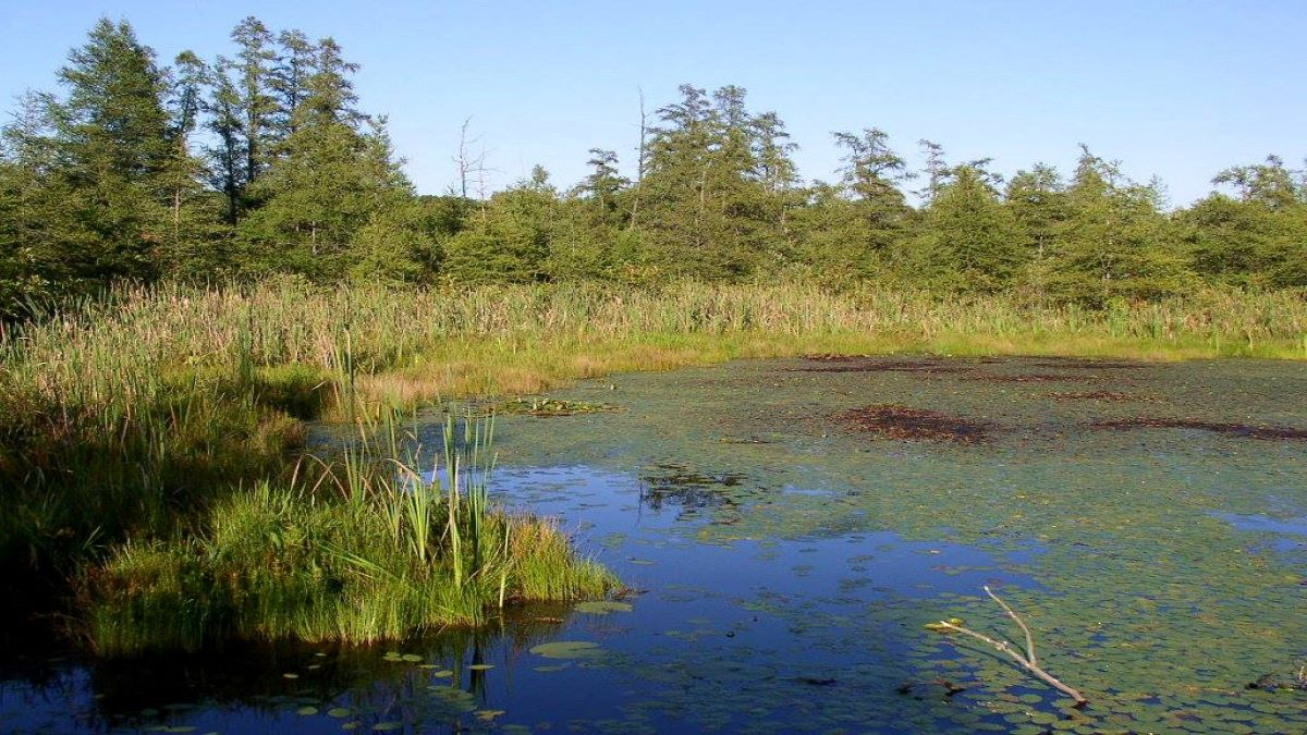 Of Bogs and Books Zooming at Volo Bog State Natural Area