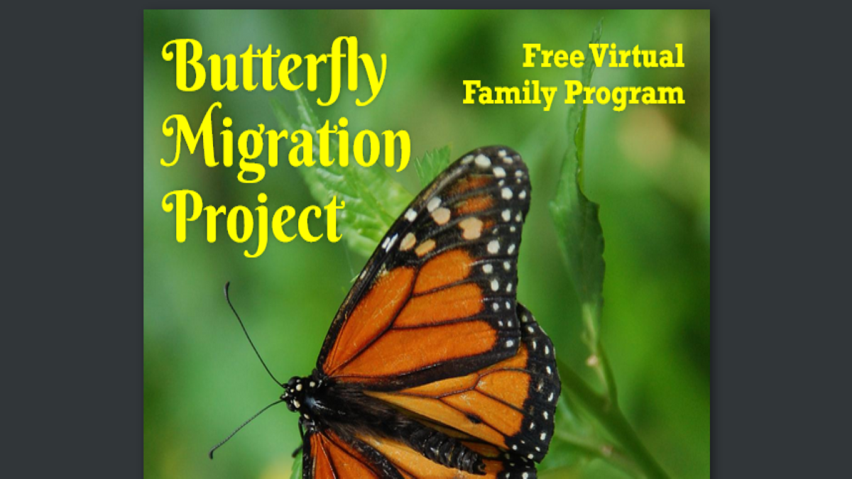 Butterfly Migration Virtual Program with Waukegan Park District