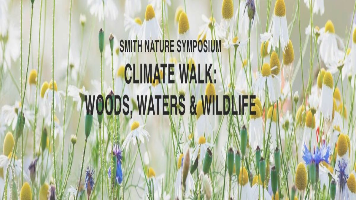 Woods, Waters and Wildflowers - A Climate Walk with a Scientist at Brushwood Center at Ryerson Woods