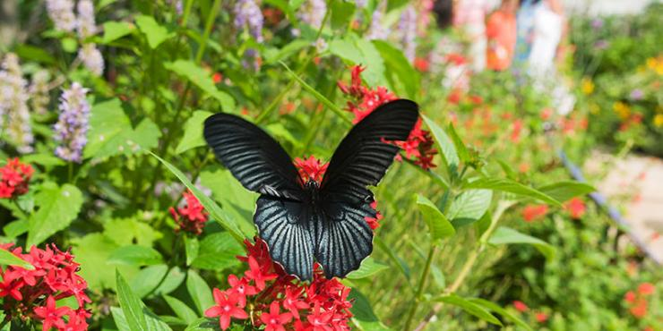 Butterflies & Blooms at the Chicago Botanic Garden