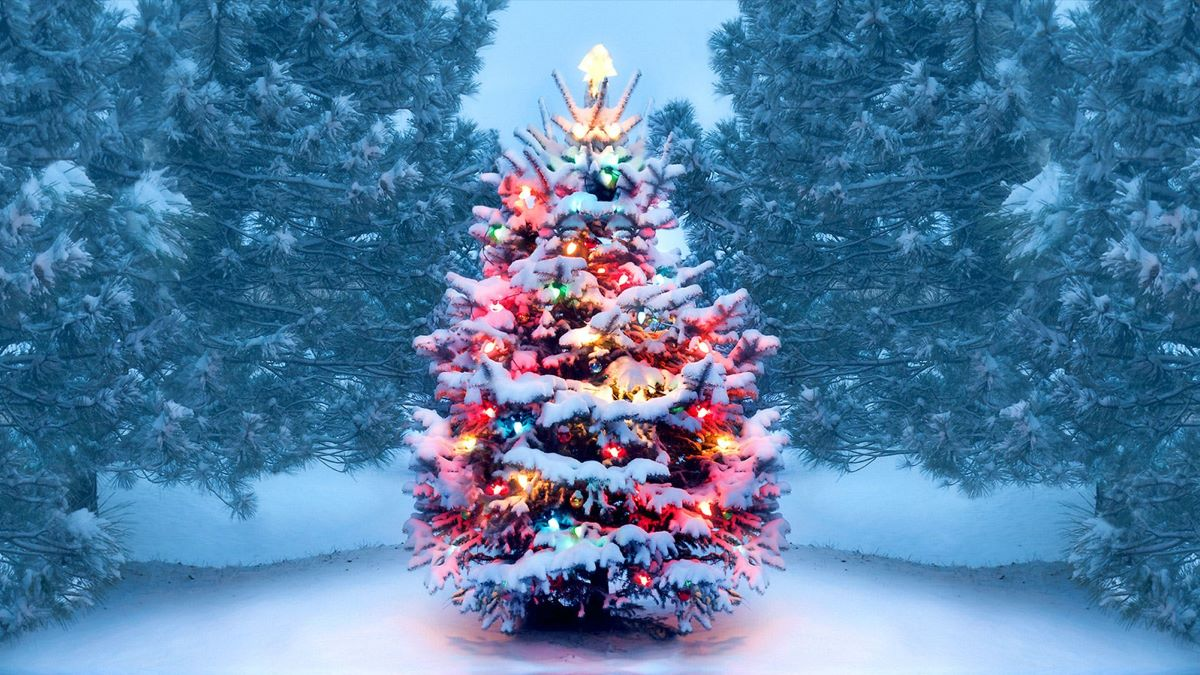 Celebrate the Christmas Tree Virtual Program with Lake County Forest Preserves