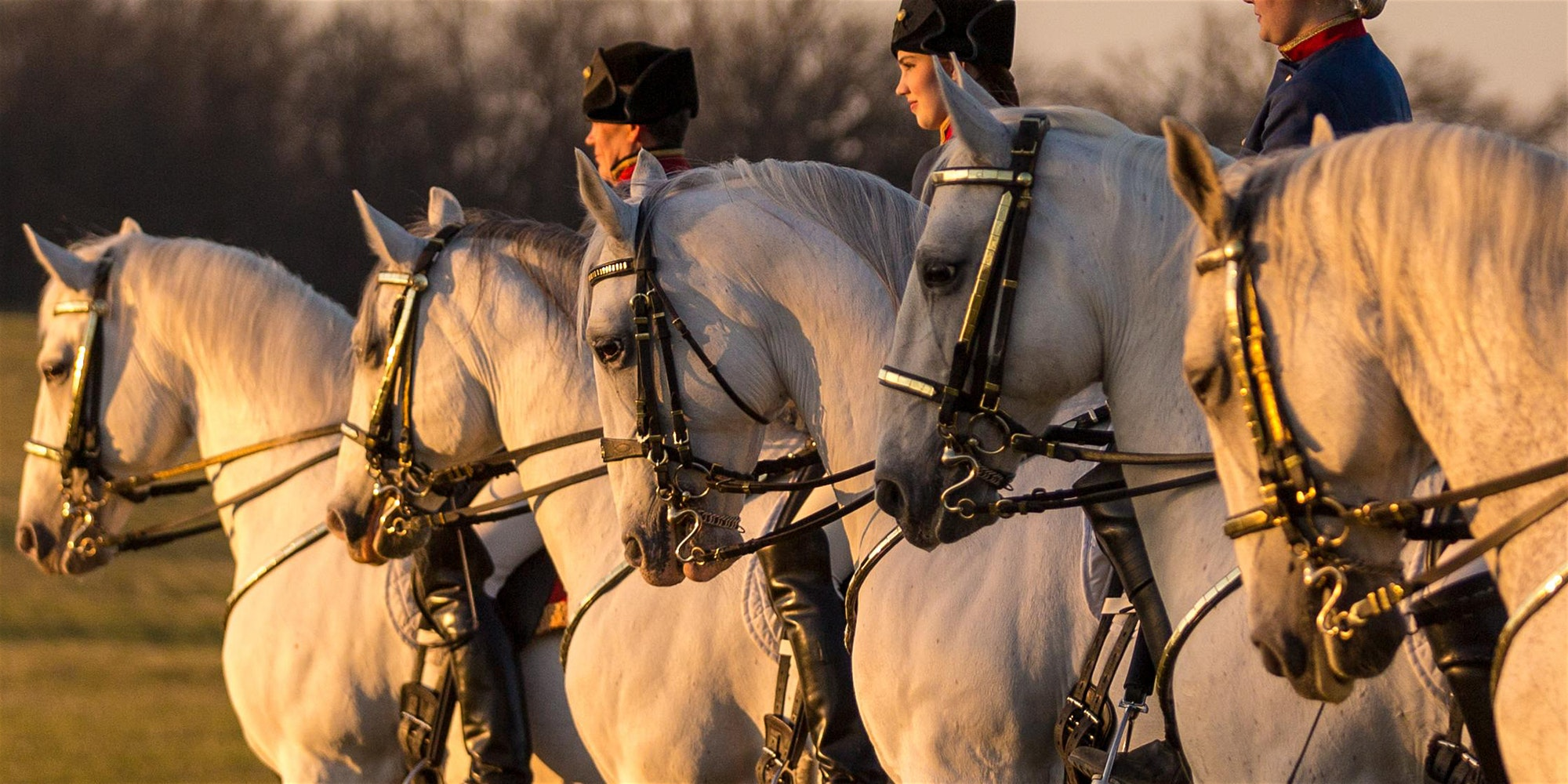 The Tempel Lipizzans Evening Performance