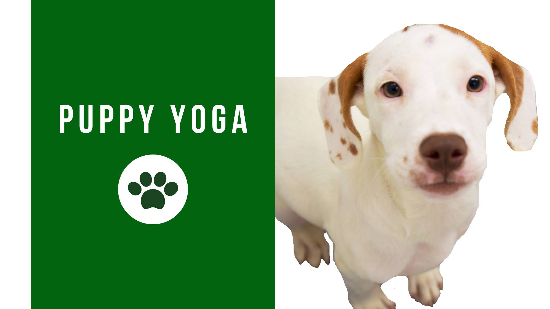 Puppy Yoga at Lambs Farm