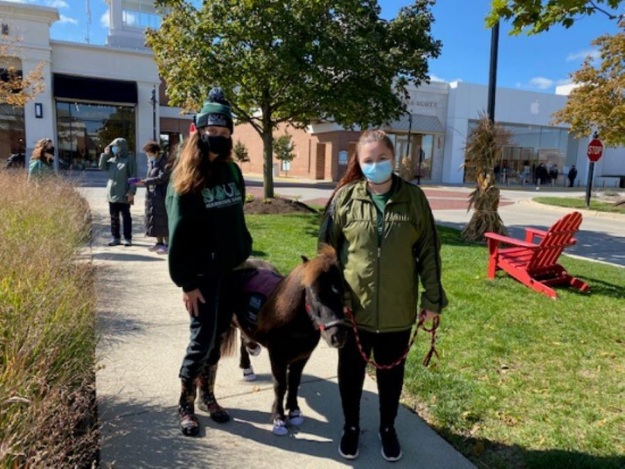 Walk with Mini Therapy Horses at Deer Park Town Center