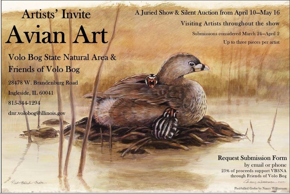 Avian Art at Volo Bog State Natural Area