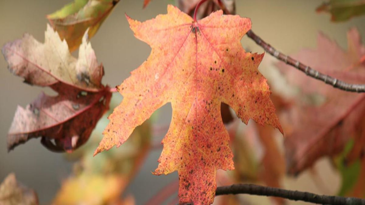 Fall Color Walk with a Naturalist at Volo Bog State Natural Area