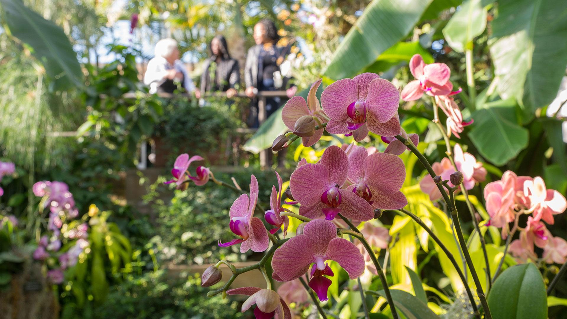Lake County Illinois Cvb Official Travel Site Chicago Botanic Garden