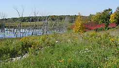 Almond Marsh Forest Preserve - Click to Enlarge